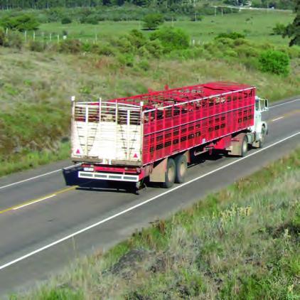 A partir del 1º de marzo los ganados deberán permanecer 90 días en el predio previo al envío a faena