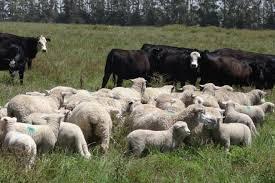 Dr. Jorge Bonino Morlan: El ovino puede ser complementario pero no secundario respecto al vacuno