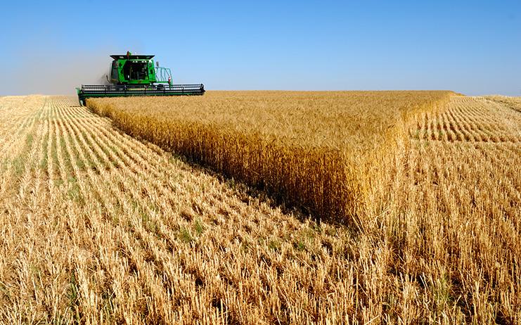 53% del área destinada a la producción de grano seco es arrendada en Uruguay