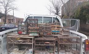Detenidos cuando llevaban  35 aves de diversas especies  de dudosa procedencia