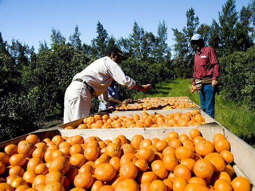 Diputados Moreno y Estévez  plantearon necesidad de apoyar  zafra de citrus 2021